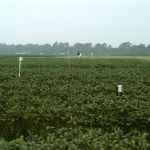 Spore traps for monitoring soybean rust